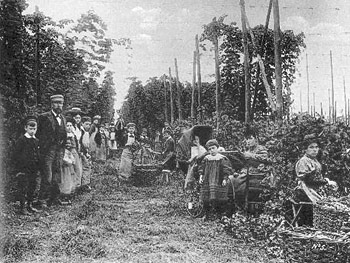 Pickers surrounded by bines